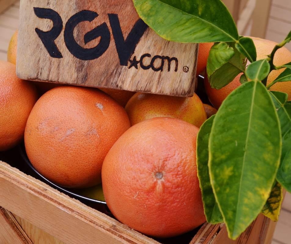 grapefruit-1